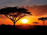 Парковете на Танзания - Серенгети, Нгоронгоро, Лейк Маняра