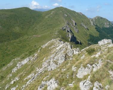 Връх Козя стена и Старопланинските еделвайси