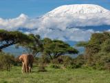 Килиманджаро - покривът на Африка